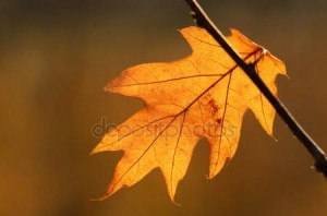 depositphotos_38259981-stock-photo-autumn-oak-leaf.jpg